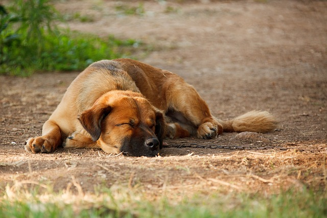 Let Sleeping Dogs Lie – Culture Change in the Church